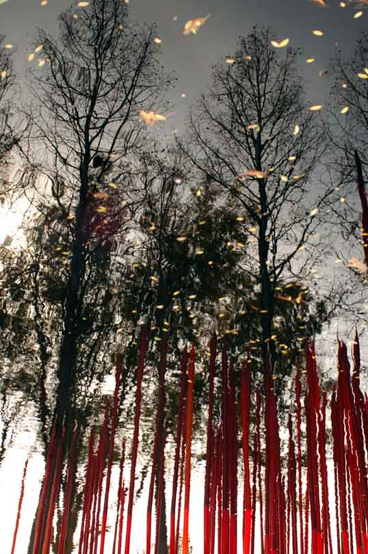 Trees reflected in a pond, inverted, with Chihuly, Red Reeds