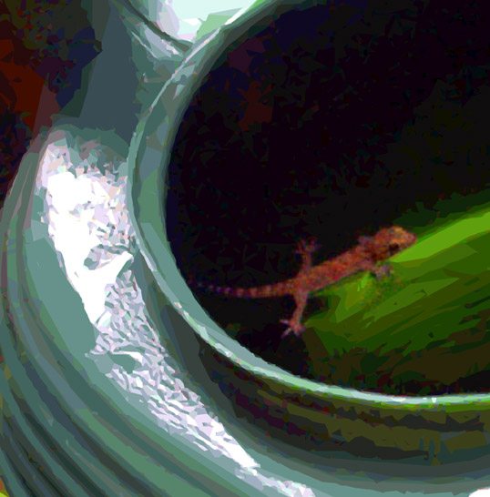 Gecko in a Watering Can