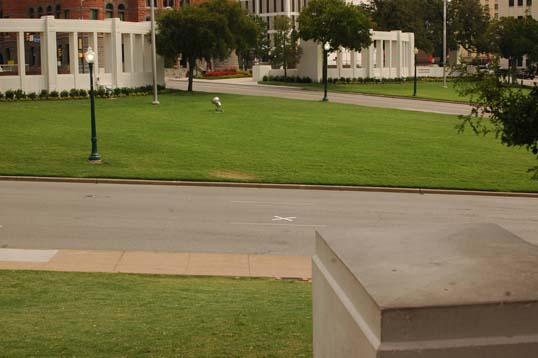 For a rare moment, the area cleared. This is the spot of the fatal shot, marked by the X. Abraham Zapruder was standing on that white concrete pillar in the foreground when he made his famous film.