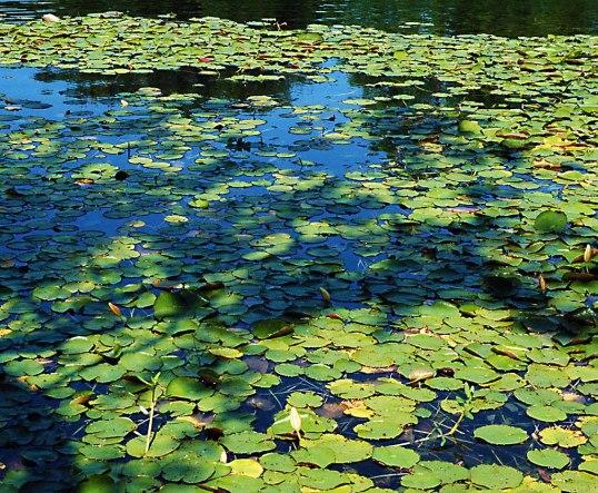 Leonhardt Lagoon, Fair Park, Dallas, Texas (click to enlarge)