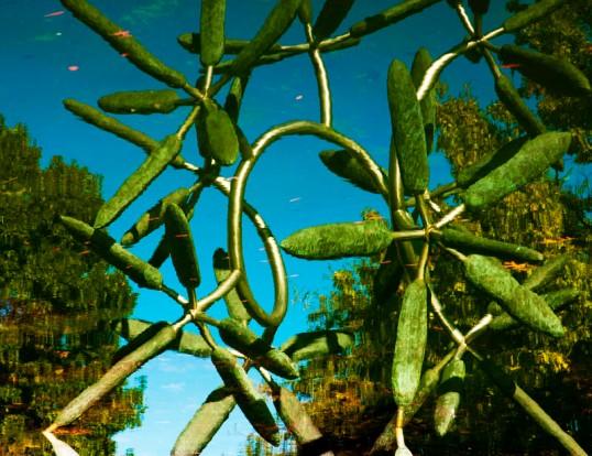 James Surls, Star Flower inverted reflection (click to enlarge)