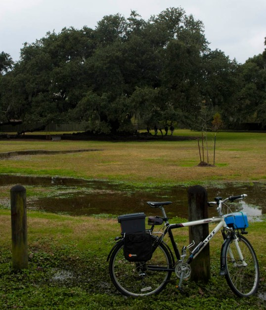 My commuter bike by the Etienne de Boré Oak - Audubon Park, New Orleans (click to enlarge)