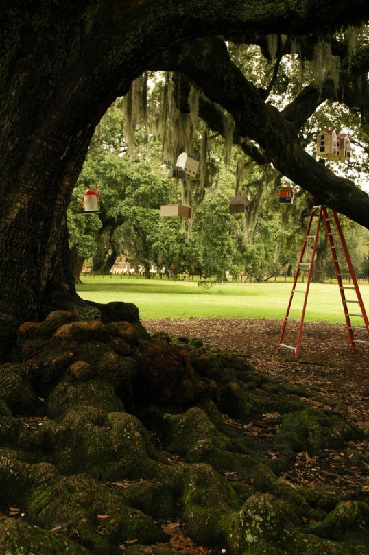 Birdhouses in the Tree of Life, Audobon Park, New Orleans (click to enlarge)