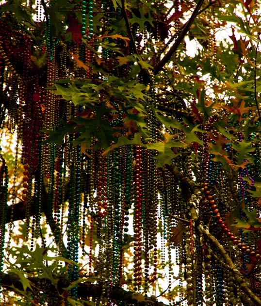 Bead Tree, Gibson Quad, Tulane, New Orleans, Louisiana