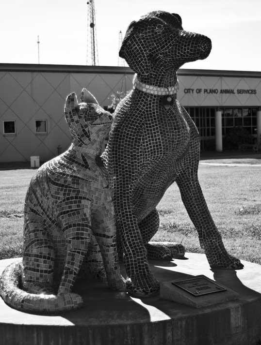 Companions Oscar Alvarado Plano Animal Shelter Plano, Texas