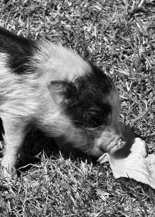 petting zoo at Rodeo Ranch Dallas, Texas
