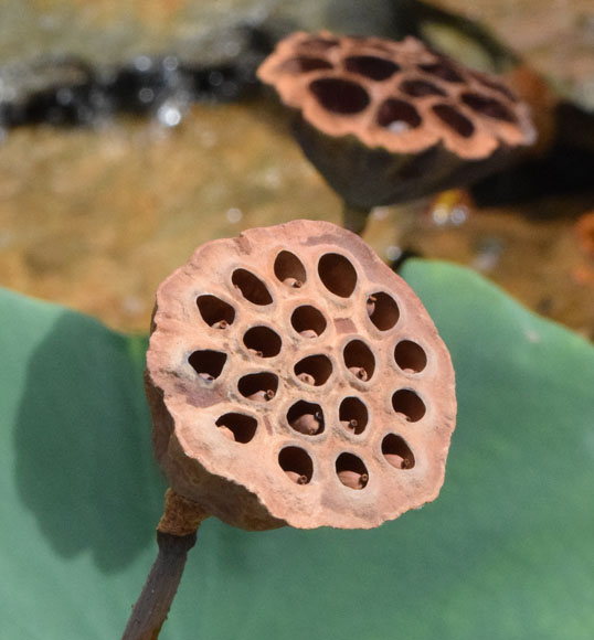 Trypophobia Bill Chance